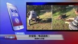 VOA连线(孙宝强):1)澳洲遣返5名偷渡中国人2)澳洲华人虐杀袋鼠 引爆民愤