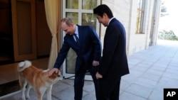 俄罗斯总统普京2月8日在索契会晤日本首相安倍晋三时轻拍他的爱犬 (2014年8月2日)