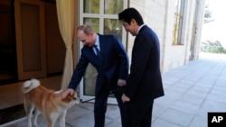 俄羅斯總統普京2月8日在索契會晤日本首相安倍晉三時輕拍他的愛犬(2014年8月2日)