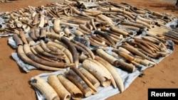 國際社會在1989年就有禁止象牙交易的國際禁令