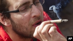Los investigadores también podrían romper el mito que la marihuana no es adictiva.