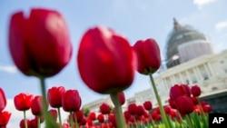 华盛顿是中国游客青睐的美国城市之一