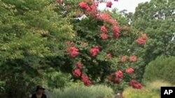 Nacionalni Arboretum u Washingtonu