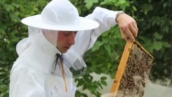 Beekeeping May Reduce Stress and Depression