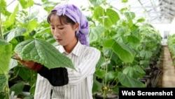 독일 구호단체 '벨트훙게르힐페', 세계기아원조의 지원을 받는 북한 농장에서 한 여성이 작물을 돌보고 있다. (사진 출처: 벨트훙게르힐페 웹사이트)