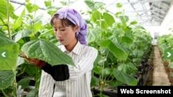 독일 구호단체 '세계기아원조'의 지원을 받는 북한의 농장. 사진 출처 = 세계기아원조 웹사이트. (자료사진)