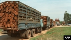 "FILE - Trucks loaded with timber wait at the Cambodian border post of Bavet for clearance to cross into Vietnam. As the logs appear to be ""unprocessed,"" export would be illegal under Cambodian law."