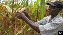 Một nông dân ở Catandica, Mozambique, đã mở rộng khu đất trồng ngô của ông từ 1 hectare lên 8 hectare