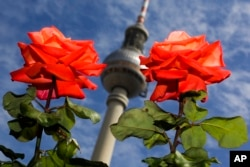 These thorny red roses bloom in the German capital Berlin, August, 2017. (AP Photo/Markus Schreiber)