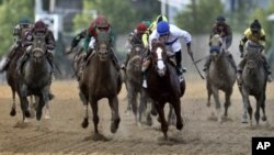 Shackleford, third right, ridden by Jesus Castanon, works down the stretch in front of Animal Kingdom, third left, ridden by Mike Smith, in front of the rest of the pack during 136th Preakness Stakes horse race at Pimlico Race Course, in Baltimore, May 21
