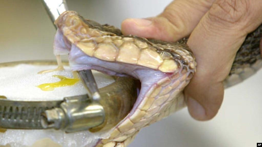 dna test identifies snake bites, Skeleton