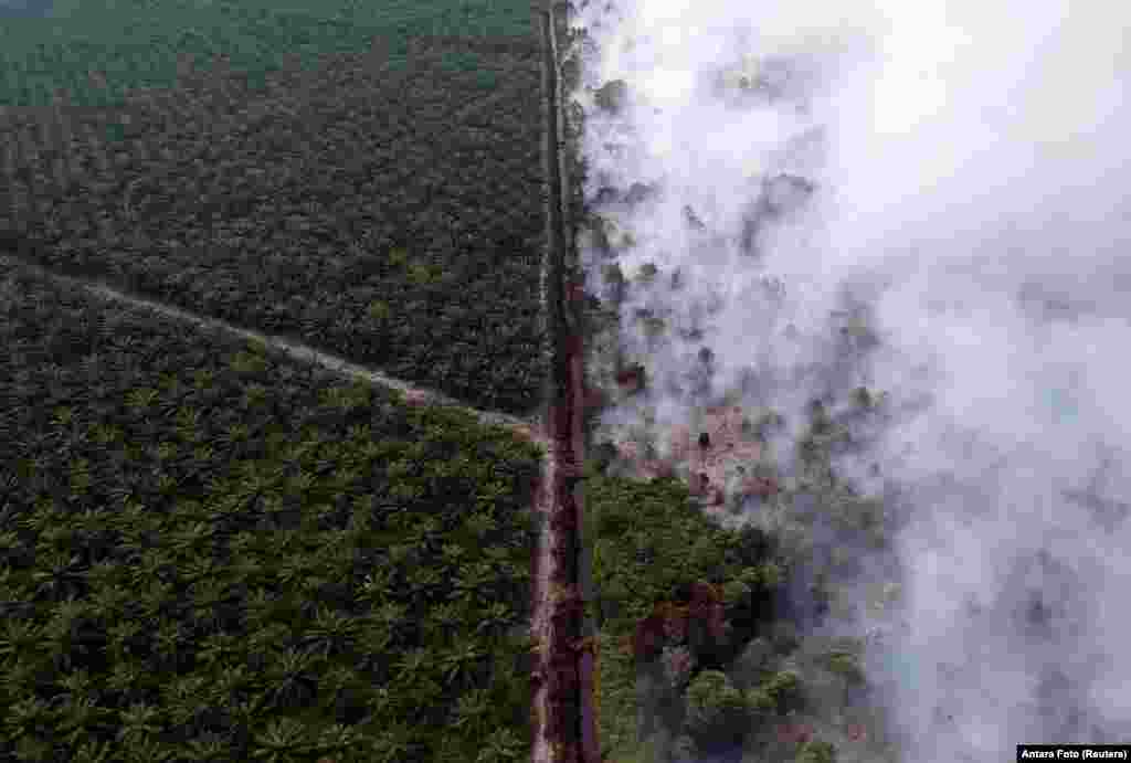 An aerial view of forest fire burning next to oil palm plantation at Kumpeh Ulu district in Muarojambi, Indonesia