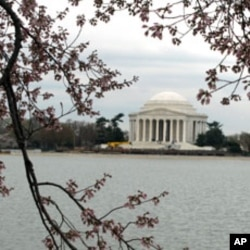 US Cherry Blossom Festival Begins With Fundraiser for Japan Quake Victims
