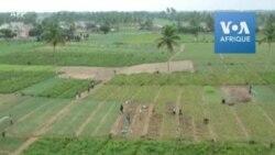 Agriculteurs et commerçants mécontents de la fermeture entre le Bénin et le Nigeria