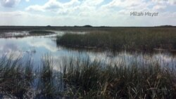 Nature Plays Starring Role in Florida's Everglades