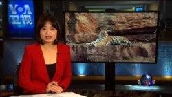 VOA卫视(2016年8月19日 第一小时节目)
