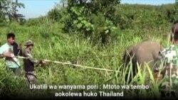 Mtoto wa Tembo aokolewa Thailand