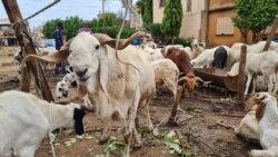 Tabaski: après la fête, les prix du mouton chutent