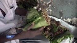 Biashara ya majani ya muguka nchini Kenya
