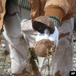 Coconut shells might be tasty to the Hindu gods but they can also poison the fish in Jamaica Bay.