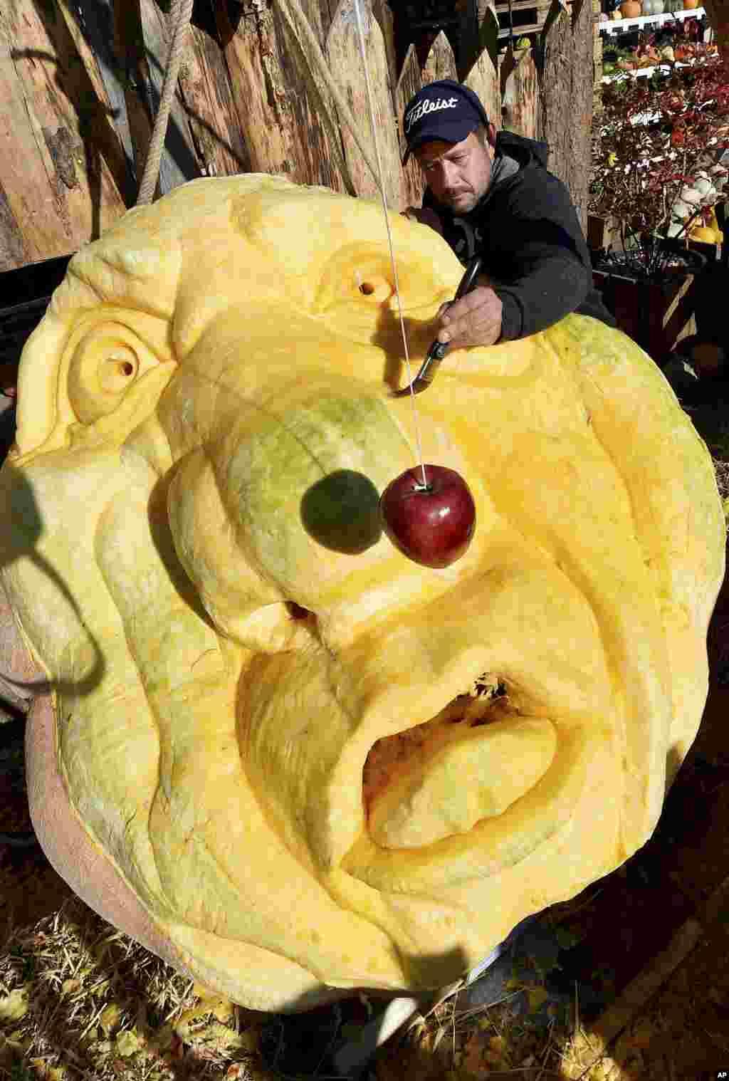 Rick Reiski works on a 560 kg pumpkin on occasion of a pumpkin exhibition in Klaistow, eastern Germany.