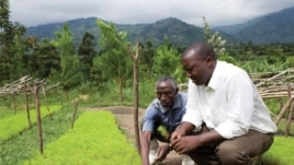 Rwenzori Mountains, Uganda. WWF has helped 574 farmers in the region plant 700,000 trees in its 5-year programme to replenish the bare hills.