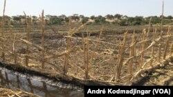 Site aménagé du village Madjikimarom, canton Ngueléa, région du Lac, le 13 novembre 2017. (VOA/André Kodmadjingar)