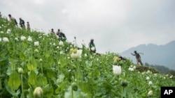 Opium Eradication