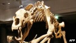 За развитие мозга у древних млекопитающих ответственно обоняние