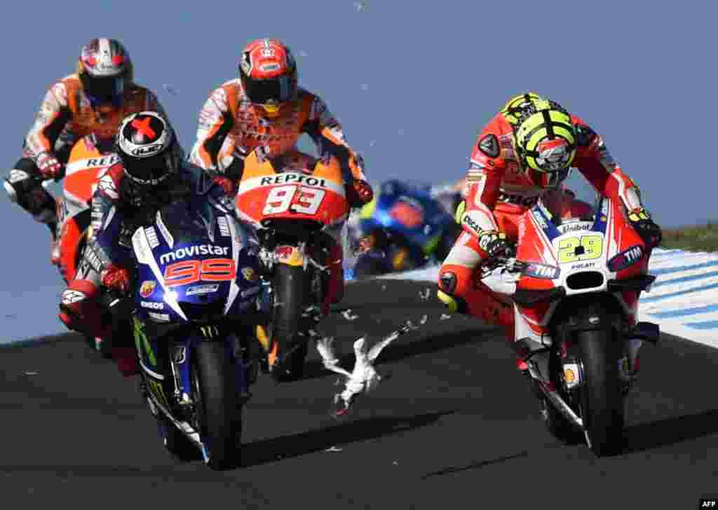 សត្វលលកហើរពីខាងមុខអ្នកបើកម៉ូតូម៉ាក្ស Repsol Honda លោក Marc Marquez (ខាងឆ្វេង) និងអ្នកបើកម៉ូតូម៉ាក្ស Movitar Yamaha លោក Jorge Lorenzo មកពីប្រទេសអេស្ប៉ាញ មុនពេលប៉ះទង្គិចជាមួយនឹងអ្នកបើកម៉ូតូម៉ាក្ស Ducati លោក Andrea Lannone មកពីប្រទេសអ៊ីតាលីនៅជុំដំបូងនៃការប្រណាំងម៉ូតូ MotoGP Australian Grand Prix នៅកោះ Phillip។