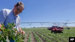 Джим Карлсон вирощує сою в Небрасці