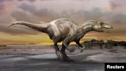 An artist's rendering of a carnivorous dinosaur unearthed in Argentina shows Murusraptor barrosaensis, which lived about 80 million years ago during the Cretaceous Period. (Courtesy: Jan Sovak)
