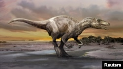 An artist's rendering of a carnivorous dinosaur unearthed in Argentina shows Murusraptor barrosaensis, which lived about 80 million years ago during the Cretaceous Period. (Handout/ Courtesy Jan Sovak)