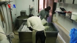 African Immigrants Run Successful Yogurt Business in Italy