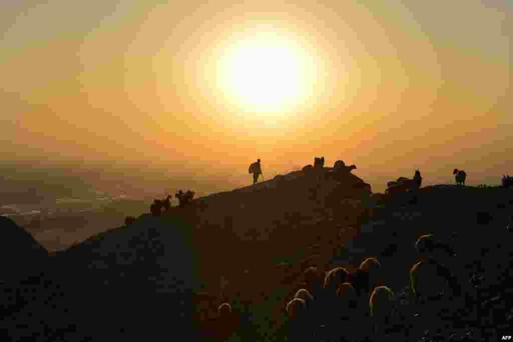 A shepherd leads his herd of sheep and goats on a hilltop during sunset on the outskirts of Jalalabad, Afghanistan.