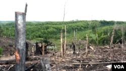 Kenaikan tarif paling tinggi akan diberlakukan untuk kawasan hutan yang sudah rusak berat akibat kegiatan pertambangan. (Foto: Ilustrasi)