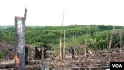 Perambahan hutan ilegal makin marak dan sulit dikendalikan akibat pemekaran wilayah dan tingginya harga pangan dunia.