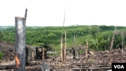 Penebangan hutan di semenanjung Kampar, propinsi Riau. Penebangan liar merupakan salah satu masalah lingkungan yang dihadapi Indonesia.