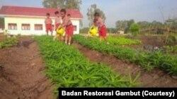 Murid-murid SD Suka Makmur di Kecamatan Lalan, Kabupaten Musi Banyuasin, Sumatera Selatan dilibatkan dalam pelestarian lahan. (Foto: Courtesy/Badan Restorasi Gambut)