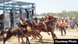 """Sumba Timur Cup 2018"" adalah salah satu pacuan kuda yang menampilkan kuda-kuda Sumba terbaik. (Courtesy: Max FM Waingapu)"