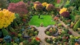 Tony Newton tends to the Four Seasons garden as it bursts into autumnal colour at his home in Walsall, West Midlands, Britain, Monday Oct. 25, 2021.