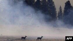 Zjarrfikësit në Arizona po bëjnë përparim për të shuar zjarret