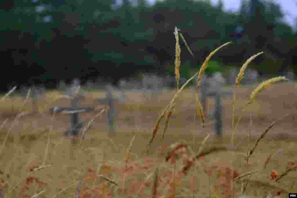Травы и кресты