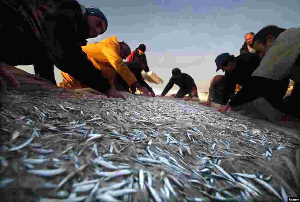 Ribari sa juga Francuske imali su sreće - ulov malih sardina u morkom prostoru između Antiba i Mentona na francuskoj rivijeri je ekskuzivitet koji počinje prvog dana proljeća i traje samo 45 dana.