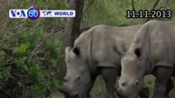 Tẩm độc vào sừng tê giác ngăn chặn nạn săn trộm (VOA60)