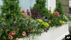 Window box garden is a great way for people with little outdoor space to grow plants. This undated image shows a window box in Richmond, Va. (Photo by Contained Creations via AP)