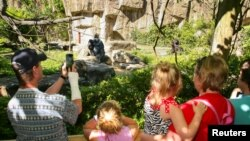 動物園大猩猩園區在加固並加高了圍欄後重開