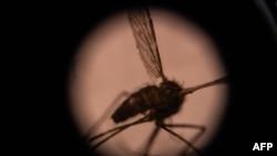 Esta fotografía ilustrativa tomada el 22 de agosto de 2019 muestra un mosquito visto a través de un microscopio en el laboratorio de entomología del Centro Nacional de Investigación y Capacitación sobre la Malaria (CNRFP), Burkina Faso.