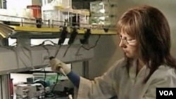 Seorang peneliti AS melakukan penelitian kanker melanoma di laboratorium.