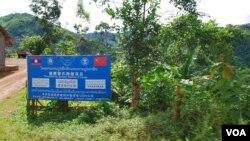 中国和老挝政府联合推出的罂粟替代种植项目。(美国之音朱诺拍摄,2013年8月11日)